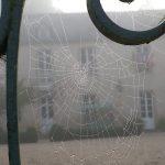 Toile d'araignée, un matin brumeux